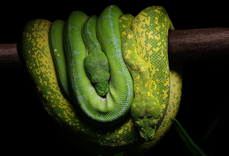 zwei die sich grün sind...