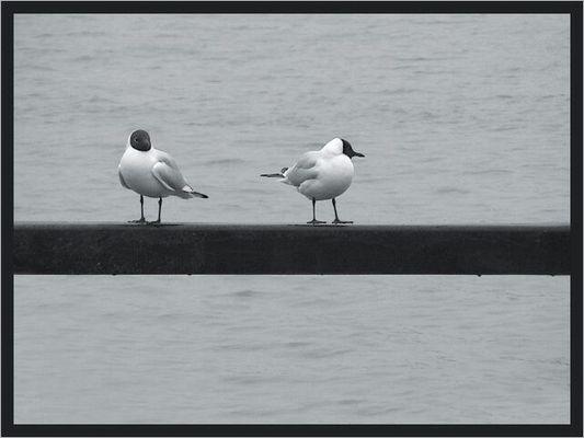 Zwei Einsame