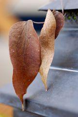 Zwei einsame Blätter