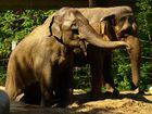 zwei Elephanten im Zoo Karlsruhe