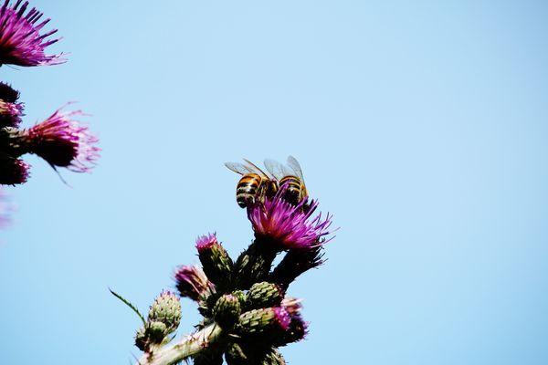 Zwei flotte Bienen zeigen
