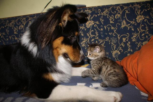 Zwei Freunde