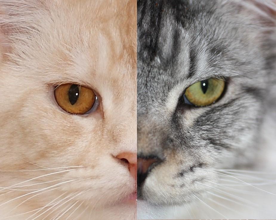 Zwei Gesichter