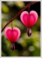 Zwei glühende Herzen...