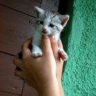 zwei handvoll katze