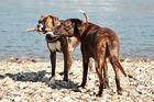 Zwei Hunde, ein Stock (die zweite)