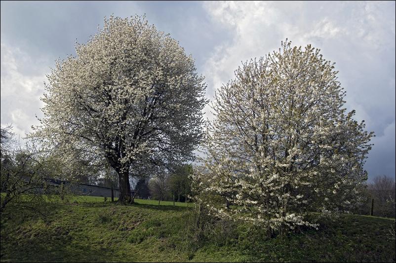 Zwei im Frühling