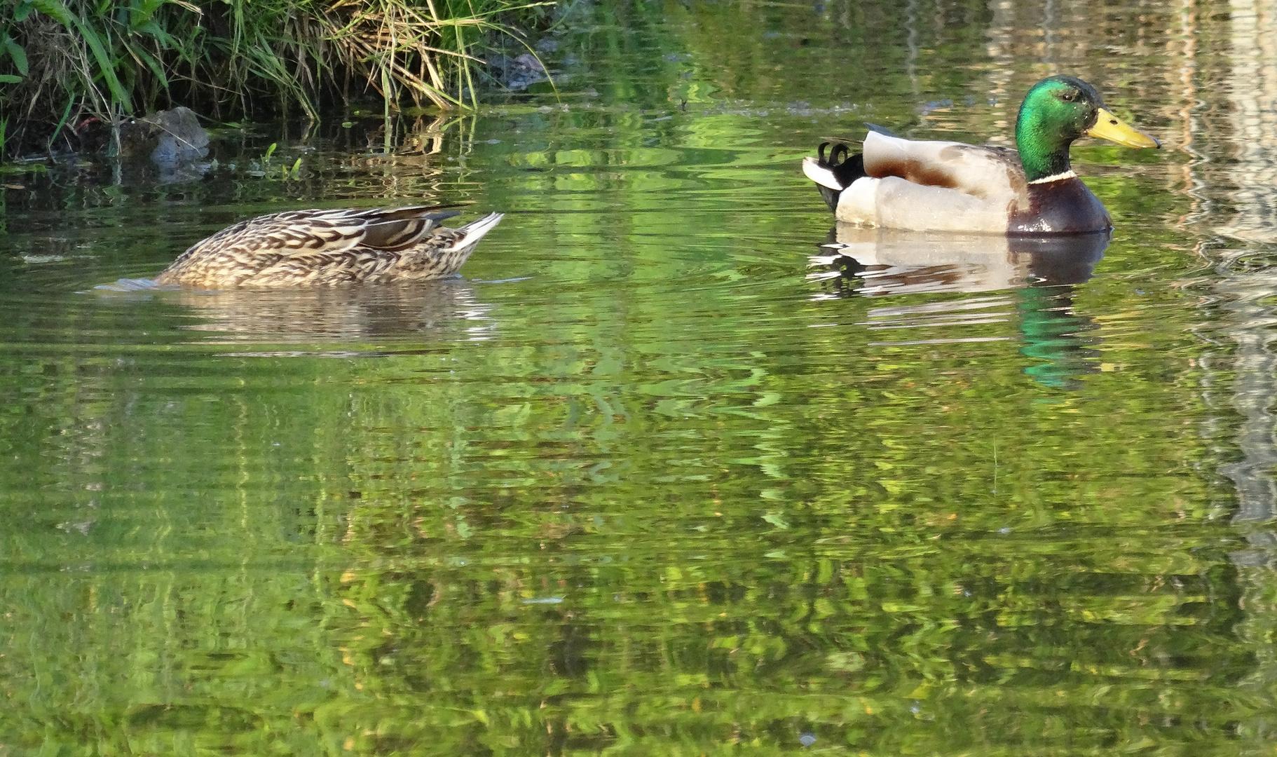 zwei im Teich