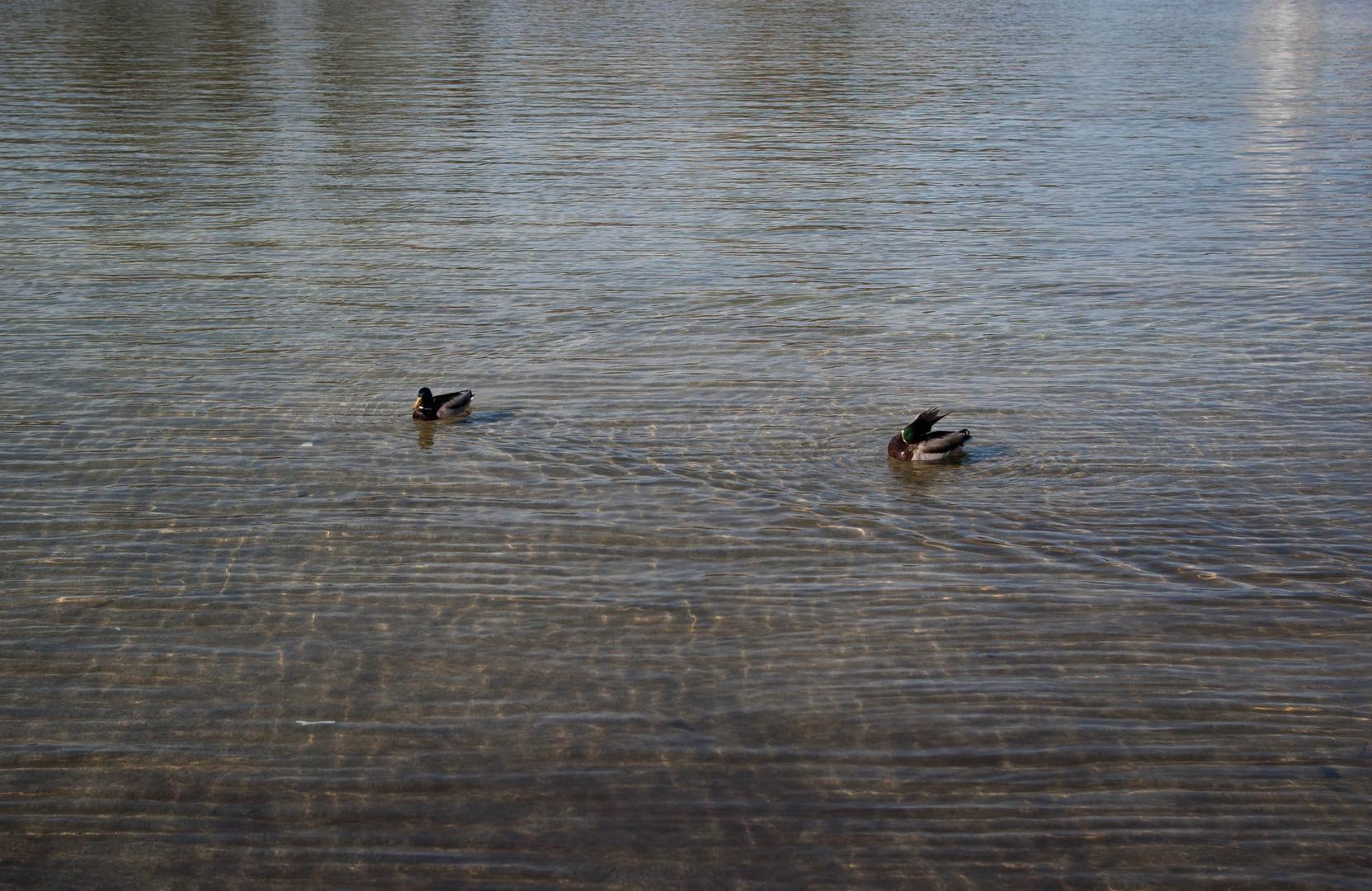 Zwei im Wasser