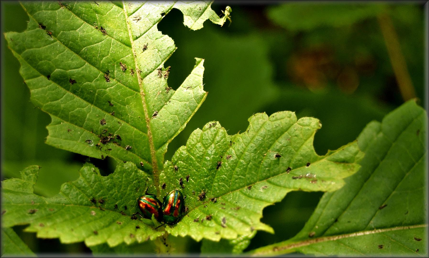 Zwei Käfer verkeilten sich in der Einfahrt zur Tiefgarage
