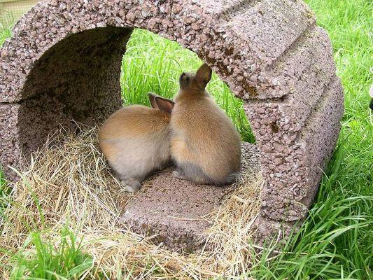 Zwei Kaninchenkinder warten auf Vermittlung
