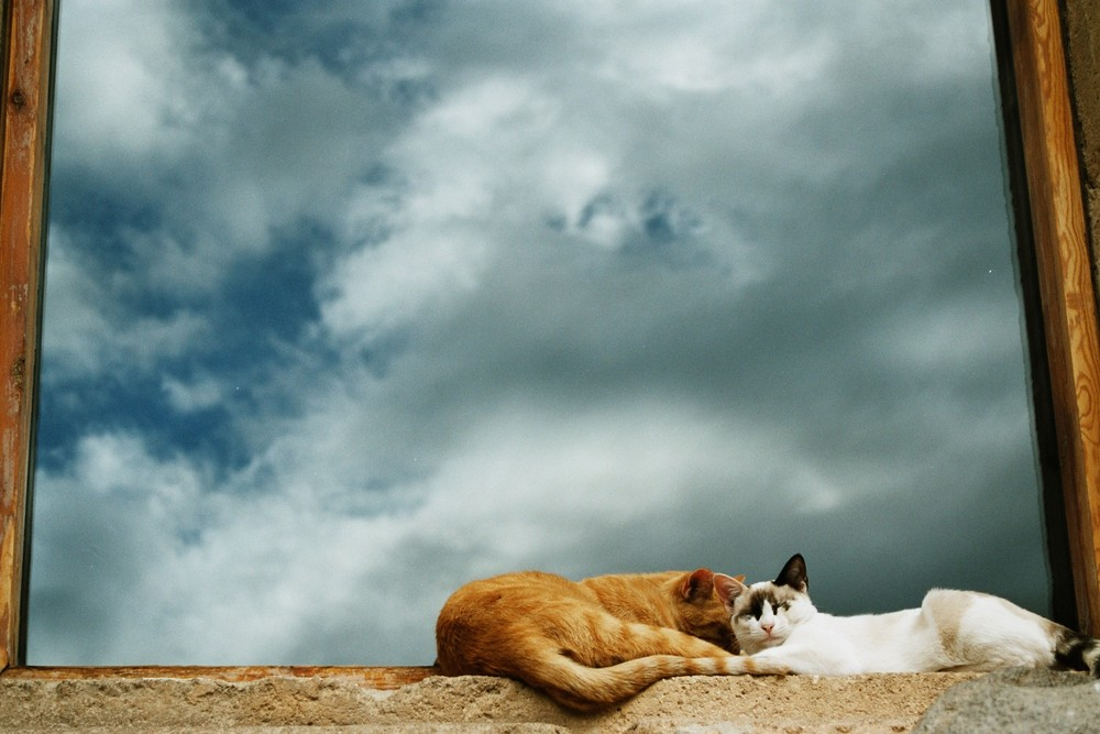 Zwei Katzen vor Wolkenhimmel - N r. 2