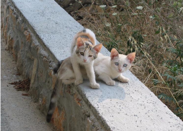 Zwei kleine Katzen