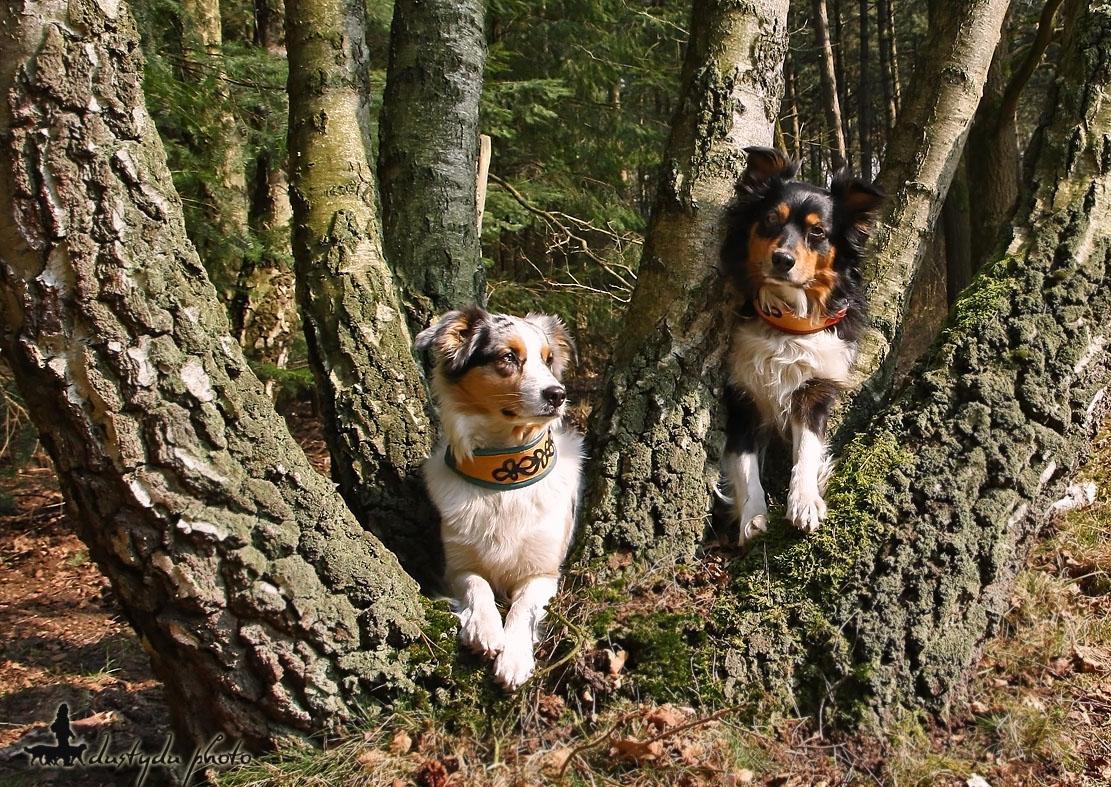 Zwei liebe Baumgeister