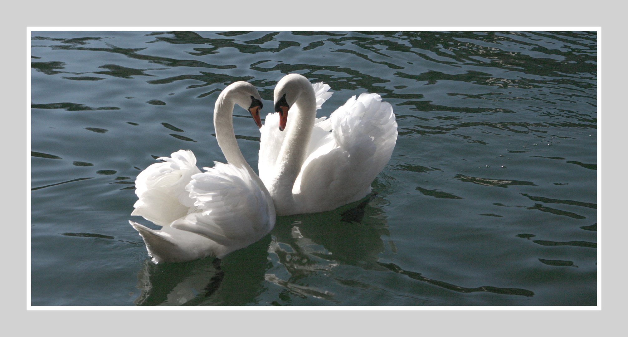 zwei Liebende unter dem Rheinfall...