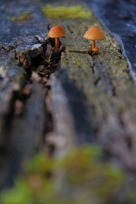Zwei Männlein stehen im Walde, ganz still, ganz stumm...