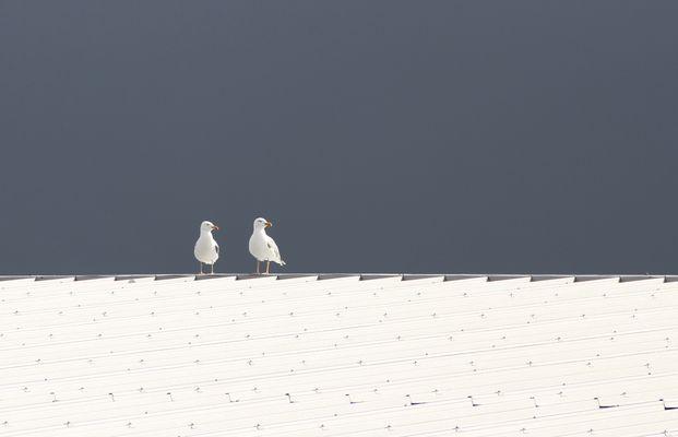 Zwei Möwen auf dem weißen Blechdach