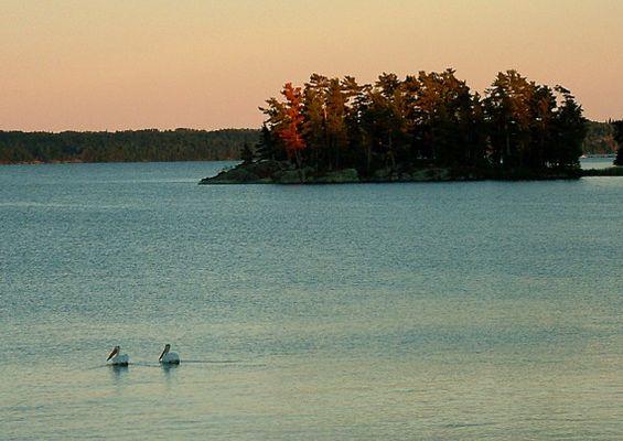 Zwei Pelikane paddeln gemächlich durch die abendliche Stille...