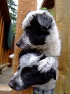Zwei Puppies auf Abwegen