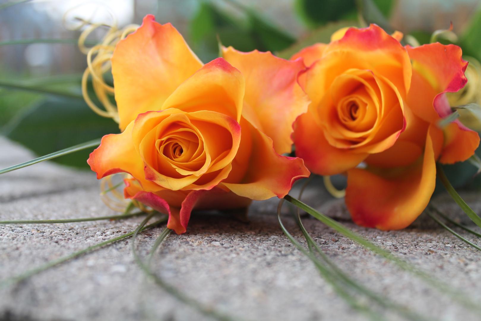 Zwei Rosen, Ein Herz!
