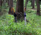 Zwei Schirme stehn im Walde ganz still....