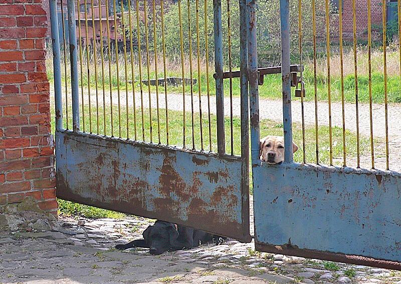 zwei sehr freundliche Wachhunde