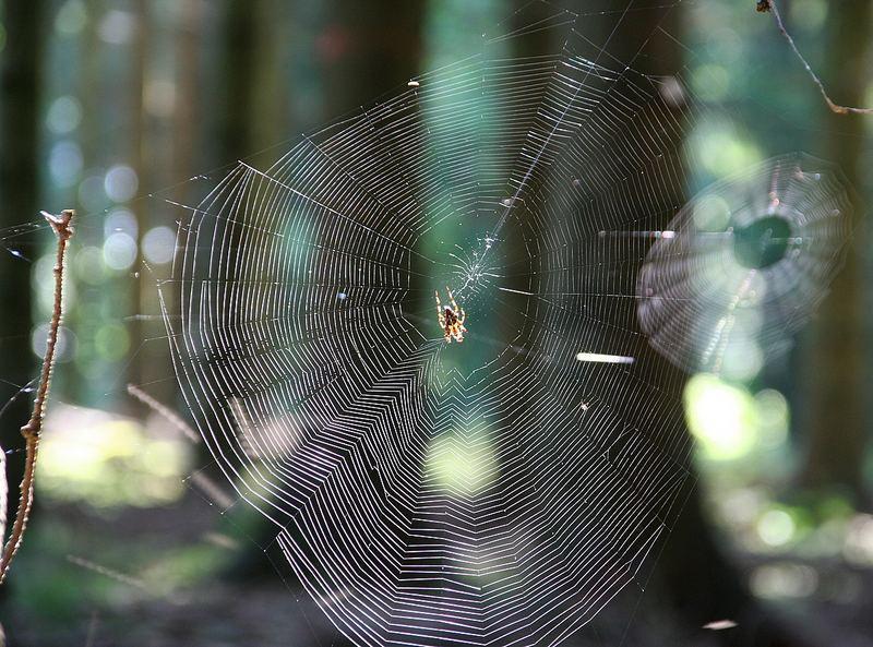 zwei Spinnennetze im Gegenlicht...
