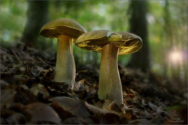 zwei Steinies aus dem Mönchswald