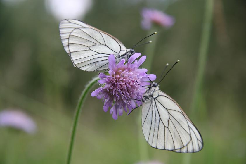 Zwei stille Schmetterlinge