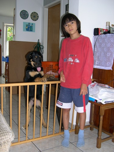 zwei süße Hunde