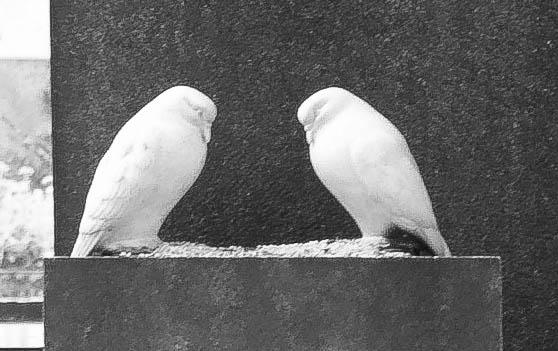 Zwei Tauben auf dem Stein