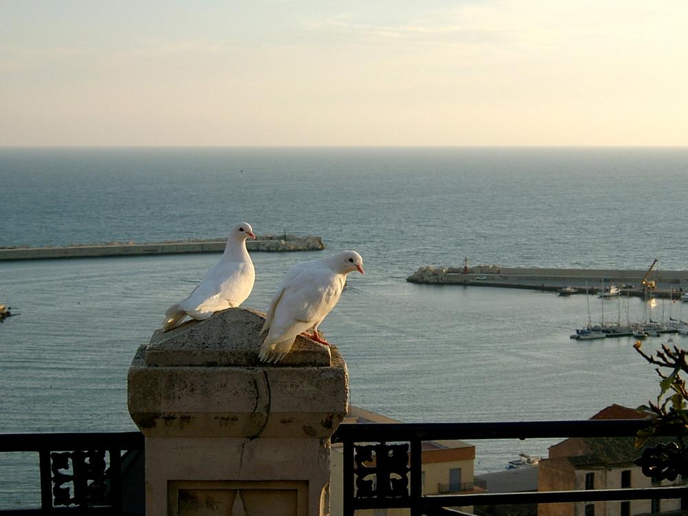 Zwei Tauben (Sciacca)