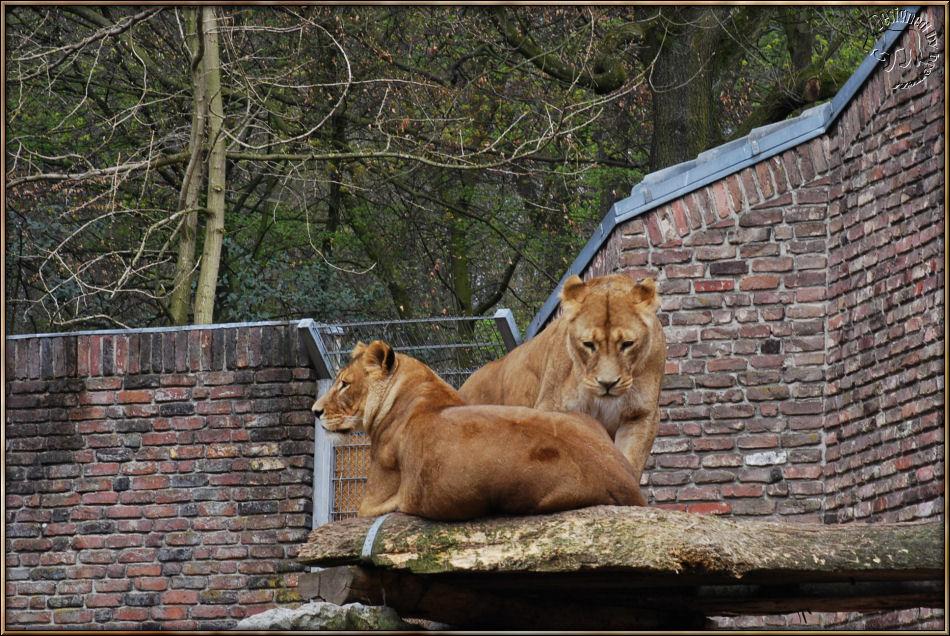 Zwei von Leo bzw Piefkes Mädels