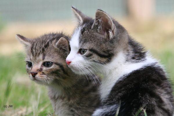 zwei von unzähligen Katzenbabys, ...