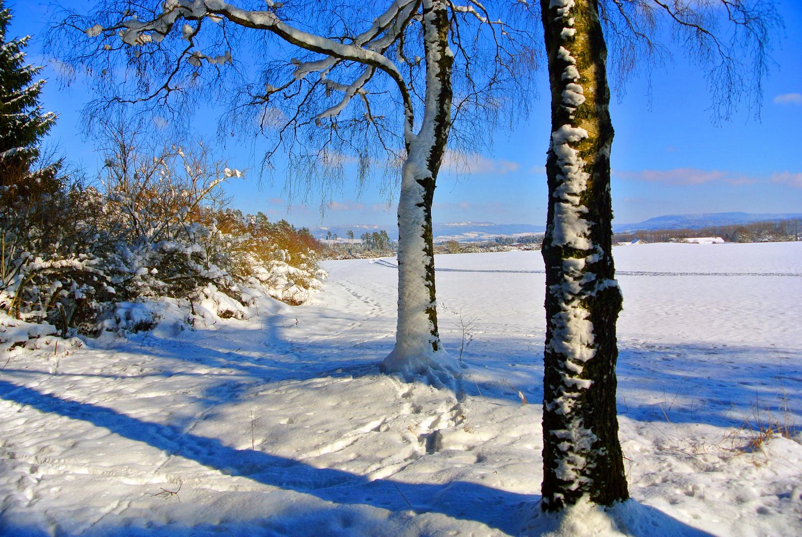 Zwei weiße Birken