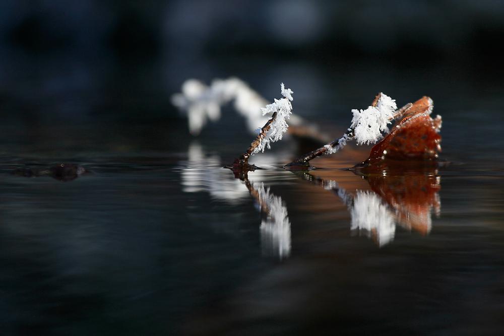 Zweig im Wasser
