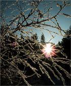 Zweige im Gegenlicht