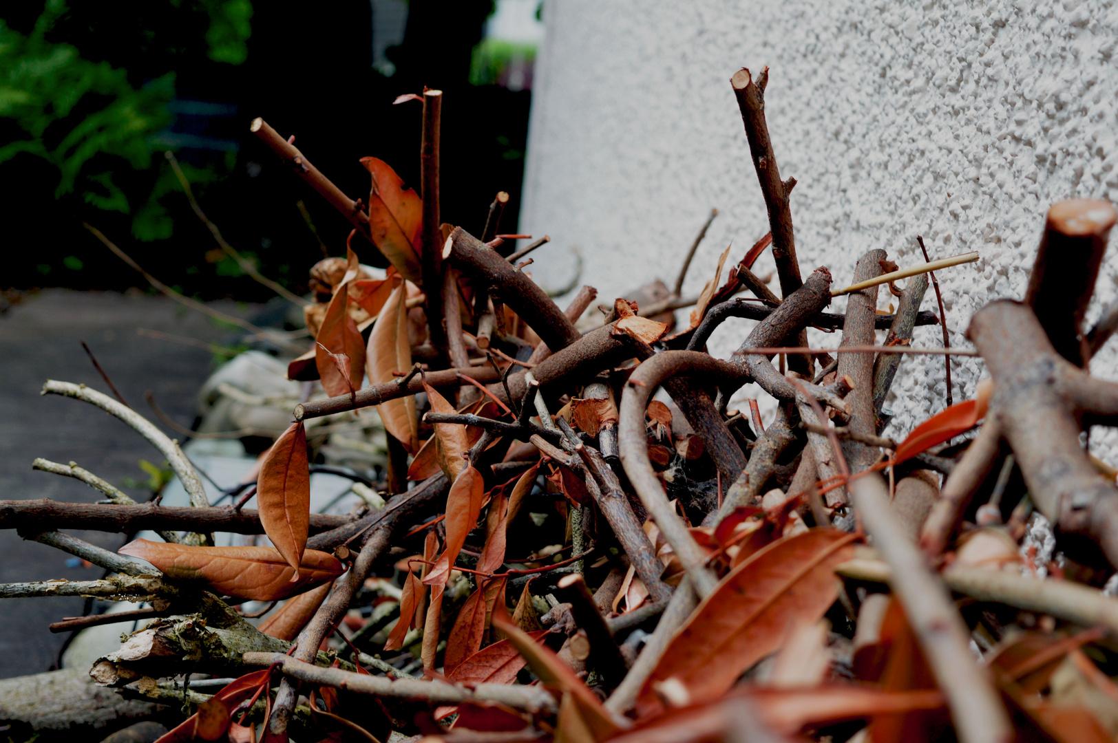 Zweige und Blätter