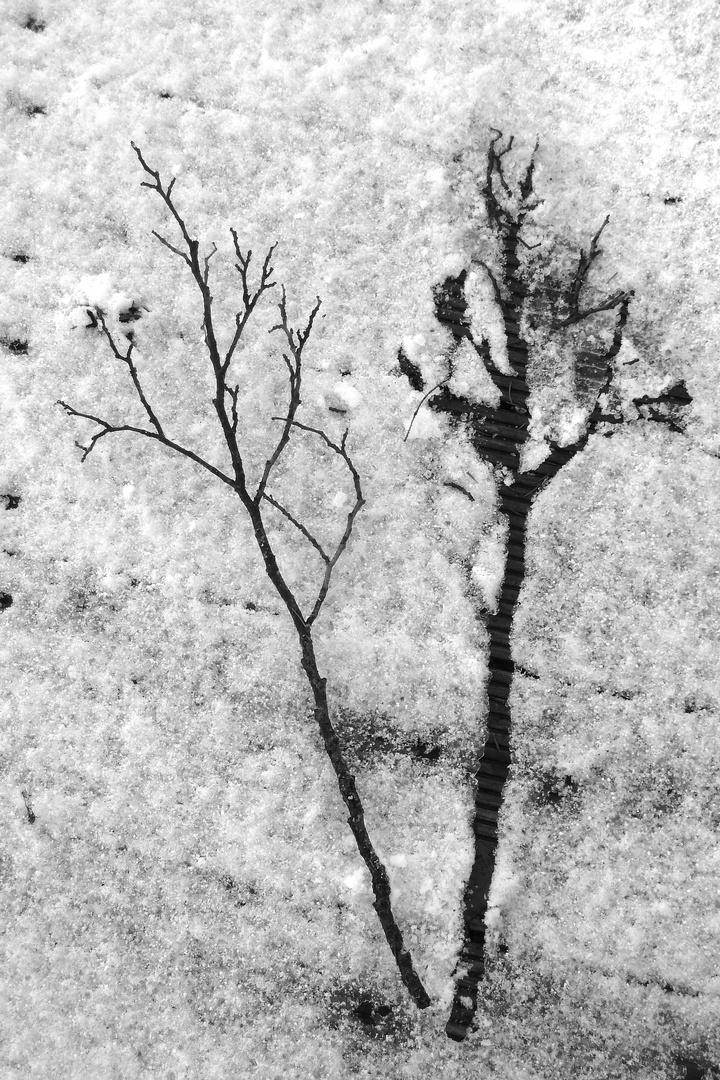 Zweigerl + Frost = Winterbild