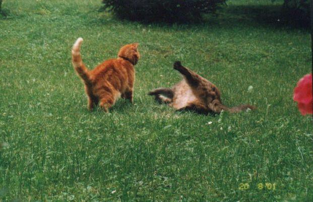 Zweikampf