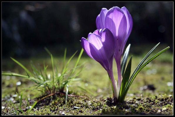 Zweisamkeit im Frühling, welch ein Glück!