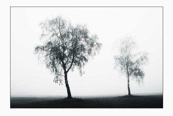 Zweisamkeit im Nebel