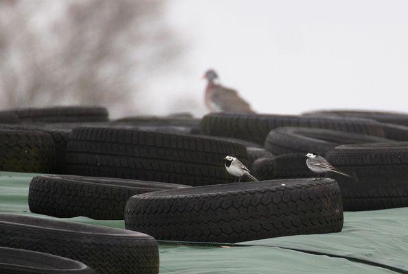 Zweisamkeit will Reifen ;-)