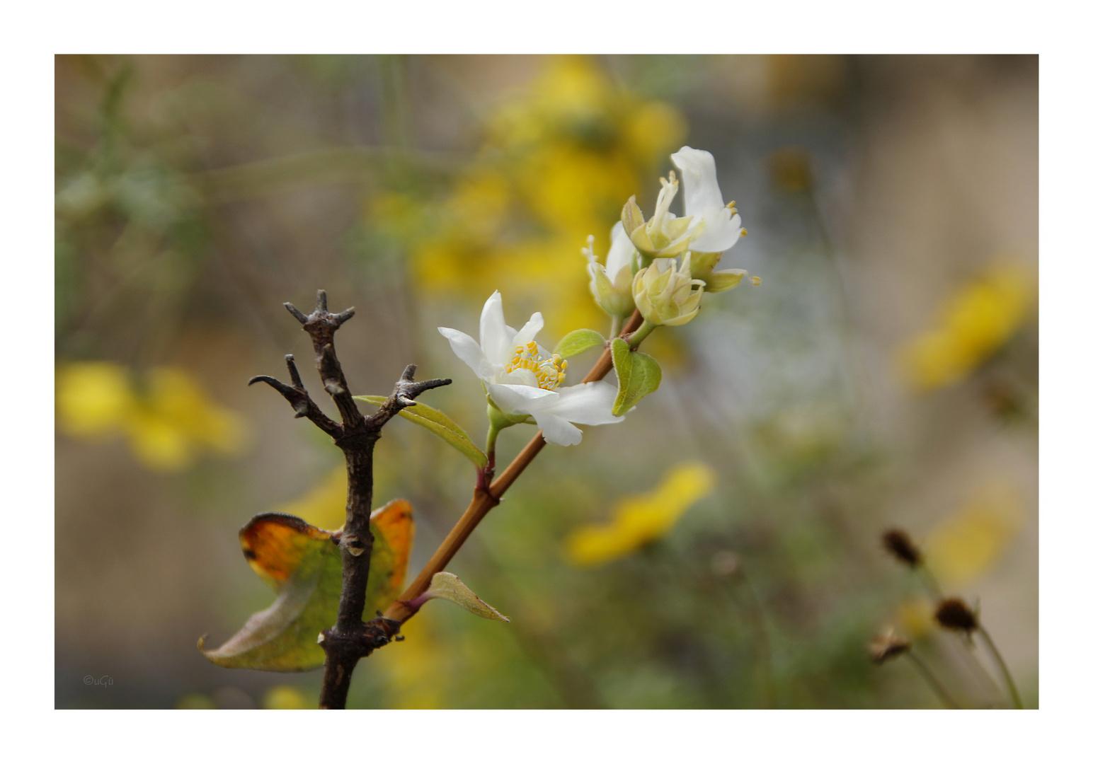 Zweiter Frühling