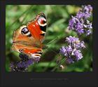Zweitversuch Schmetterling August 2005