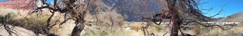 Zwillingbäume in der Atakamawüste