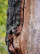 Zwischen Baum und Borke...