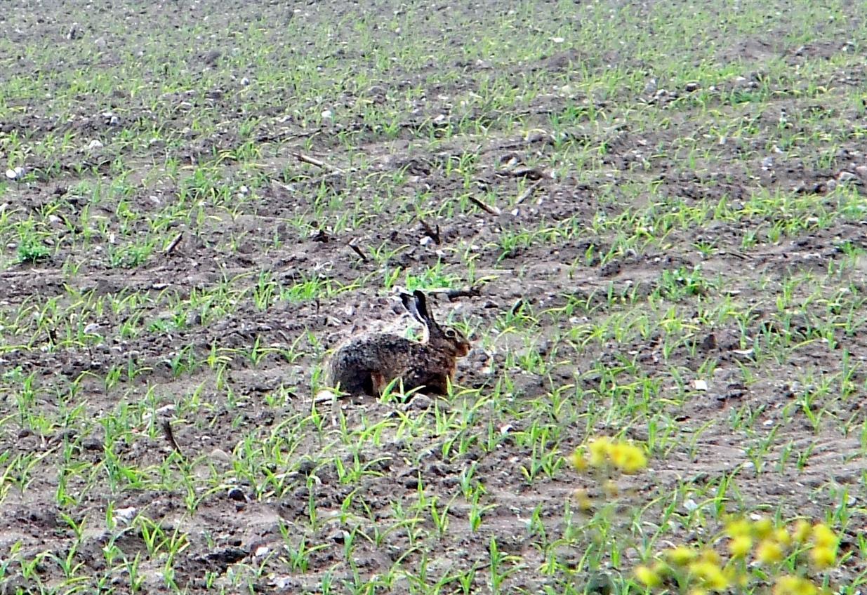 Zwischen Berg und tiefen Tal sass nur 1 Hase