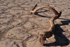 Zwischen den Dünen - Death Valley National Park