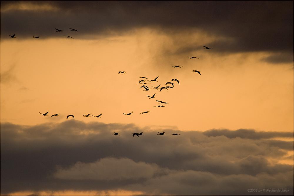 Zwischen den Himmeln